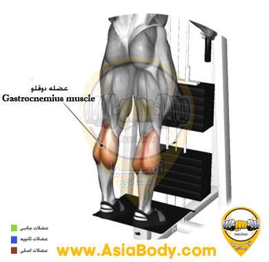 آموزش حرکت ساق پا ایستاده دستگاه