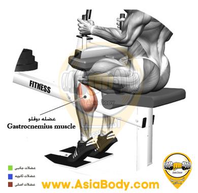 آموزش حرکت ساق پا نشسته با دستگاه